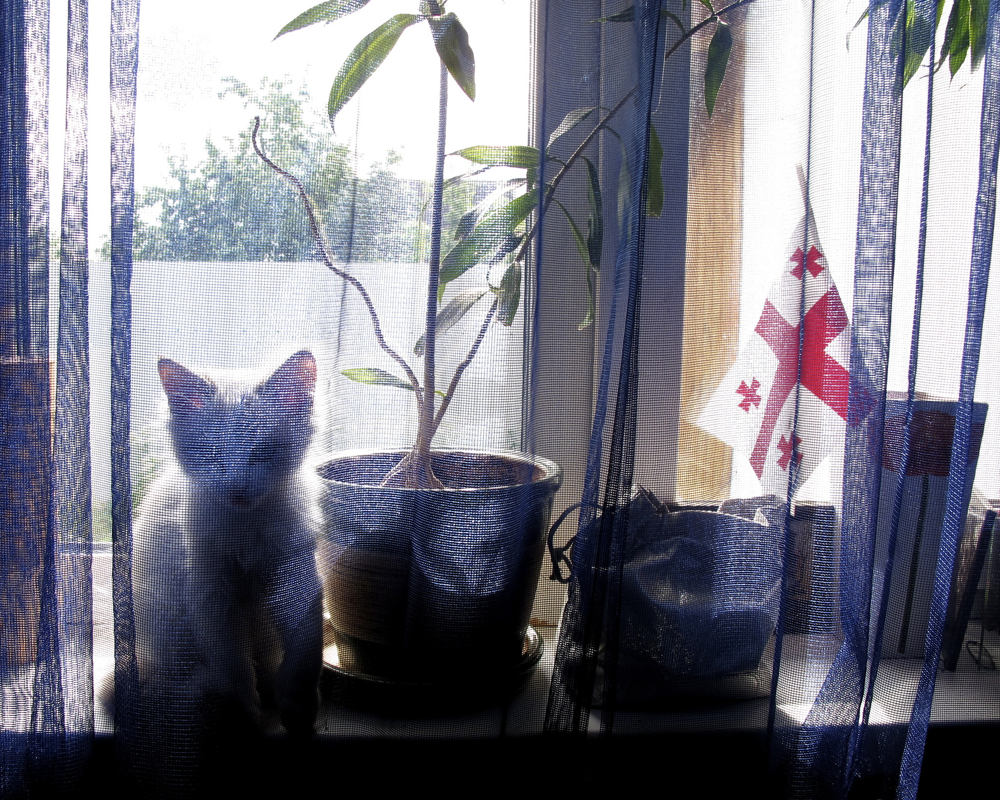 Cat on a windowsill with a small Georgian flag in a flower vase.